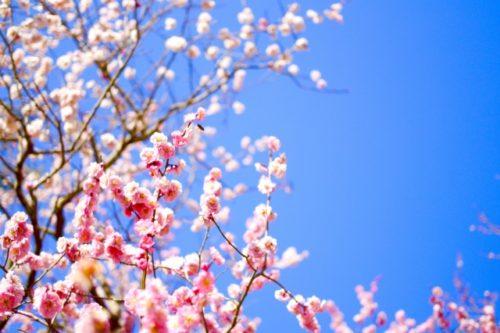 出逢いの春!